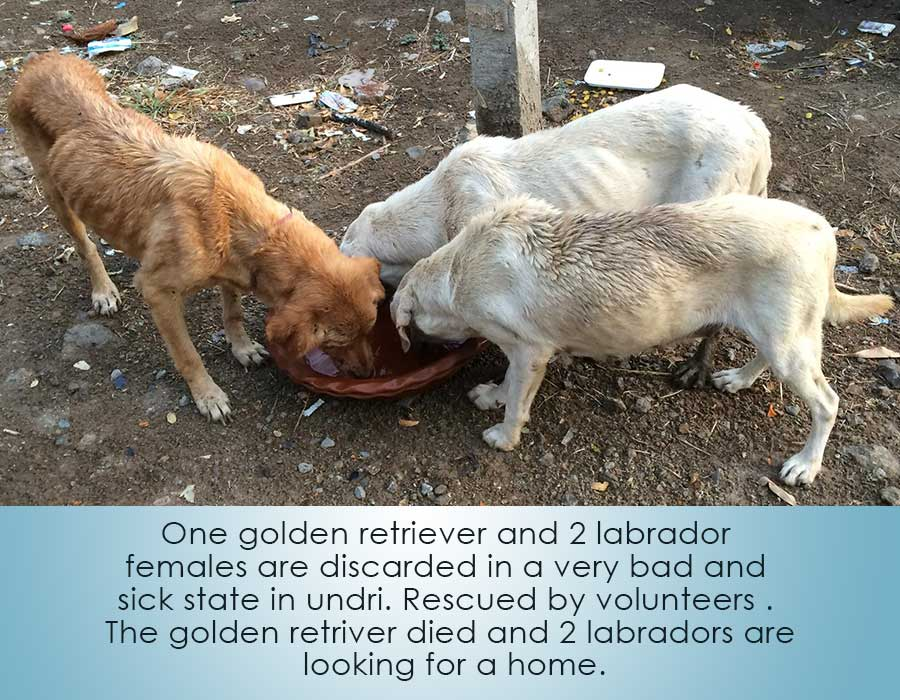 Save Dogs